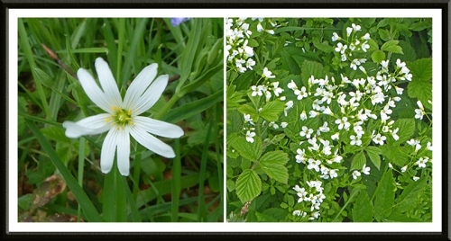 stitchwort and white wild flower