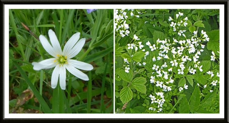stitchwort and white wild flower
