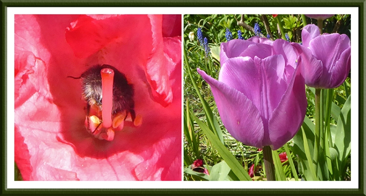 bee and tulip
