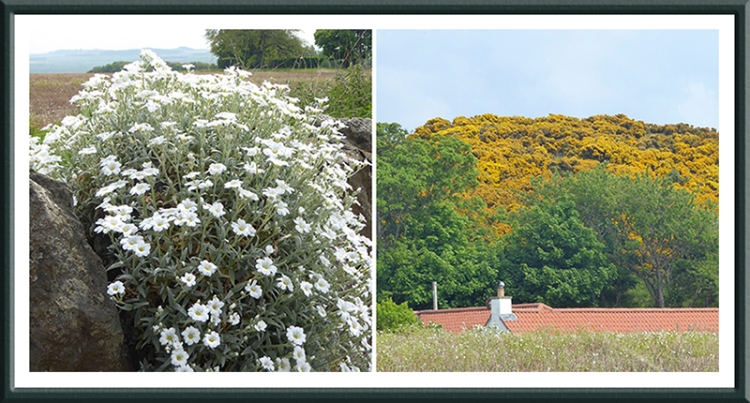 wall and gorse