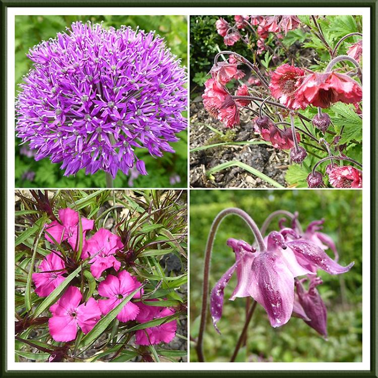 red/purple flowers