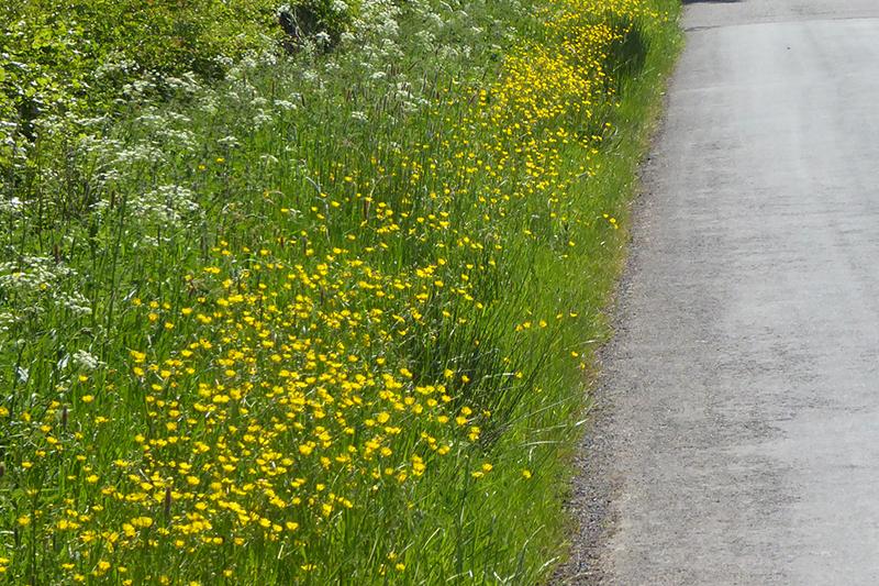 Sprinkell road (2)