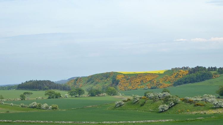 view near athelstanford (4)