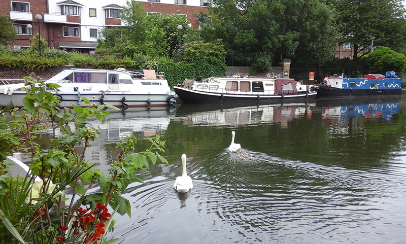 King's Place Swans