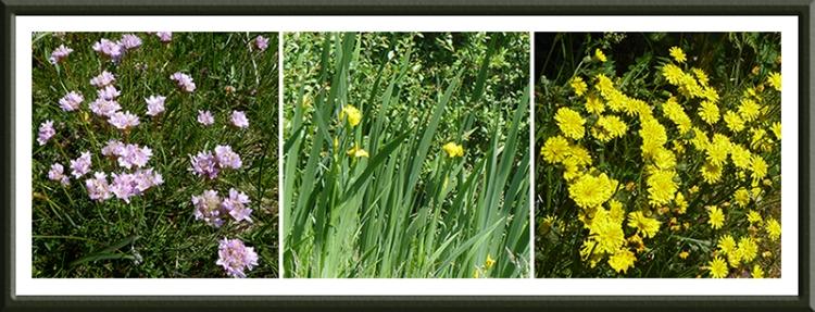 anthorn wild flowers
