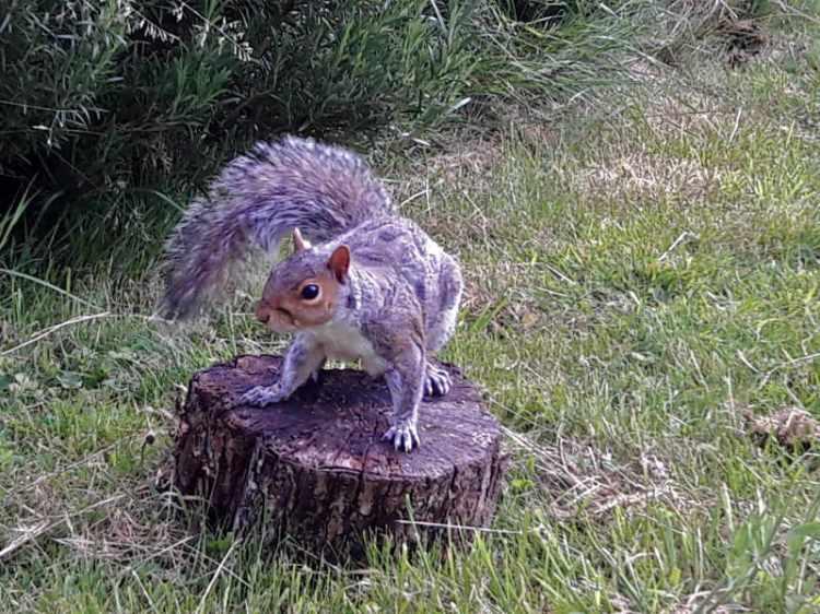 ant's squirrel