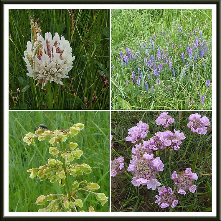 Brow houses wild flowers