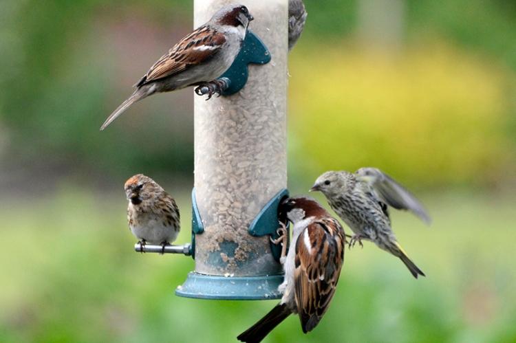 busy feeder (2)