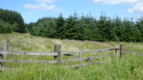 Callister gate