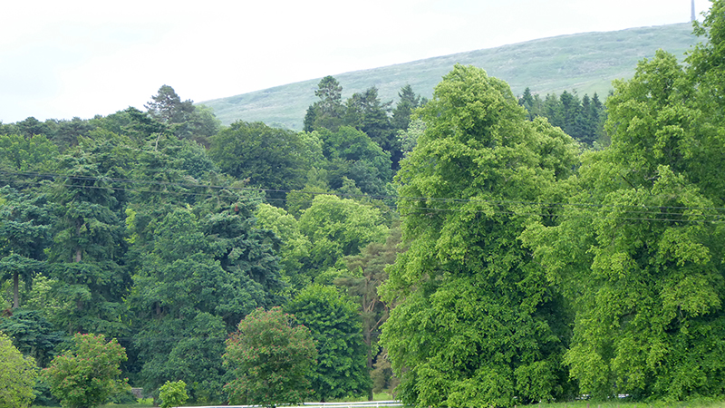 Castleholm tree view