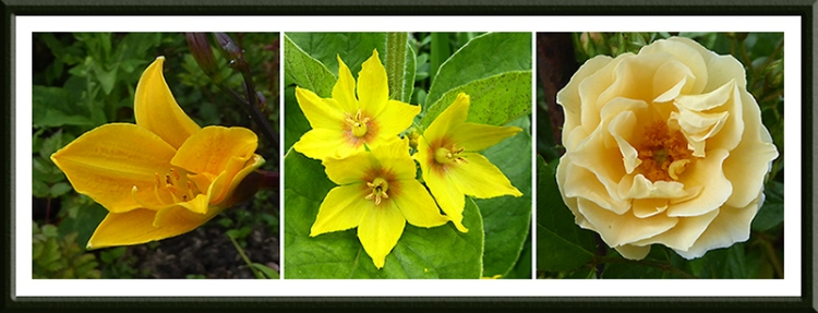 day lilly, loosestrife and goldfinch rose