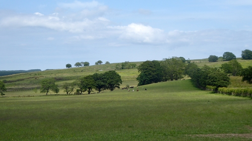 fields from Gair road (2)
