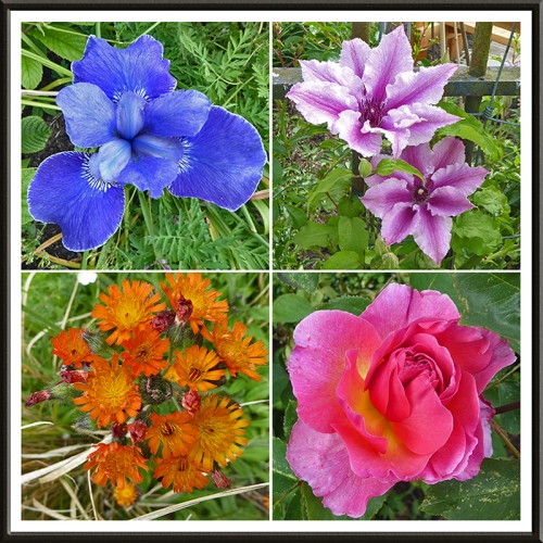 garden flowers in afternoon