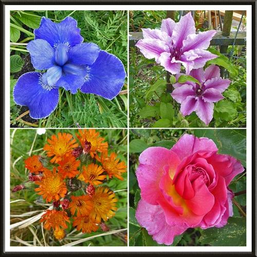 garden flowers in afternoon