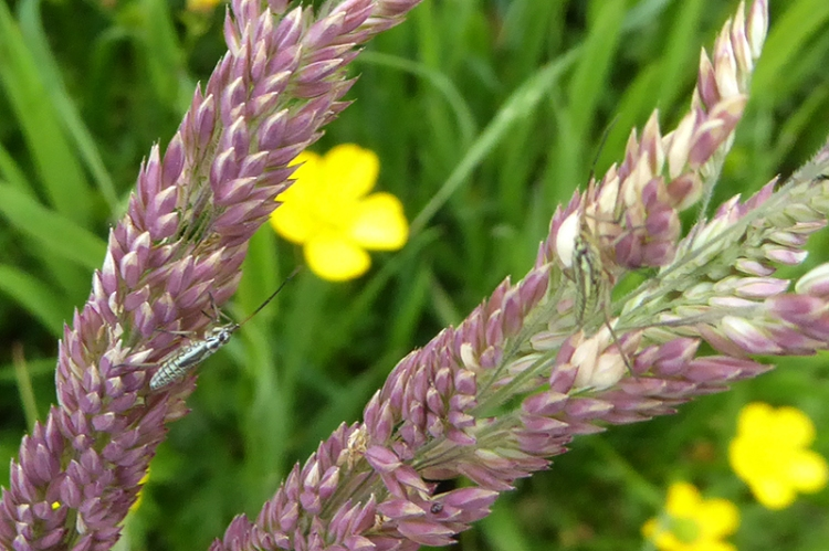 grass with insects