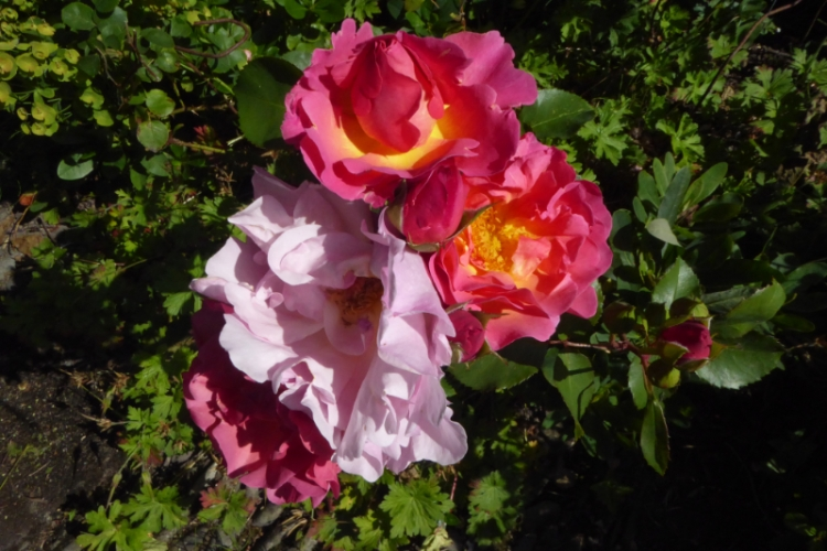 lilian austin group