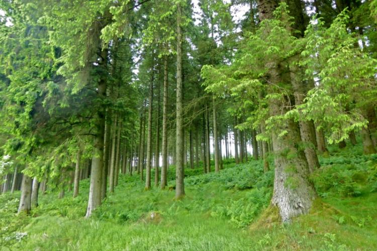 Newcastleton forest (2)