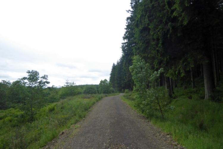 Newcastleton forest
