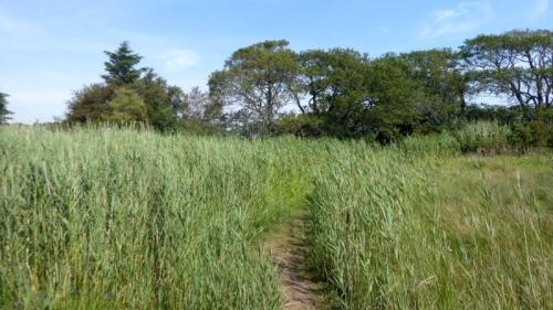 nith reeds