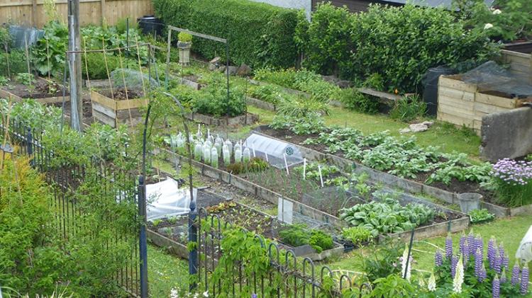 Veg garden from above