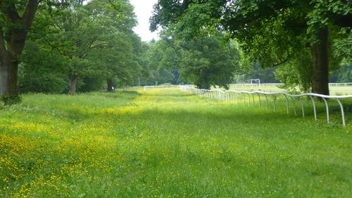 race course castleholm with buttercups