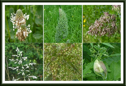 wild grasses and nettle