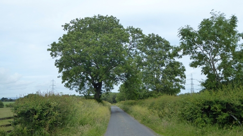springfield road