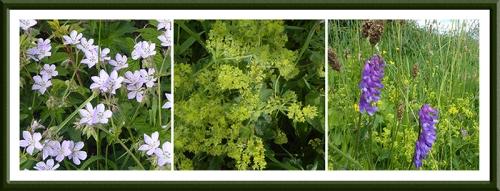 wild flowers Gair