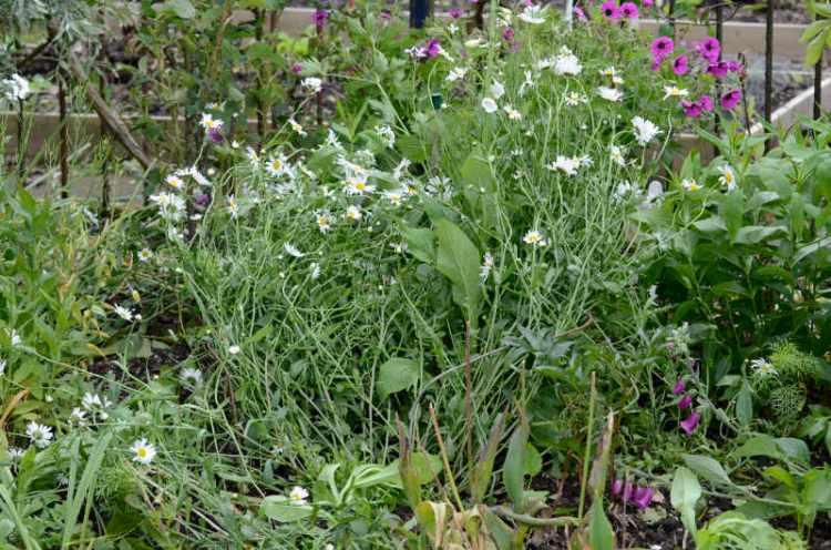 windblow in garden