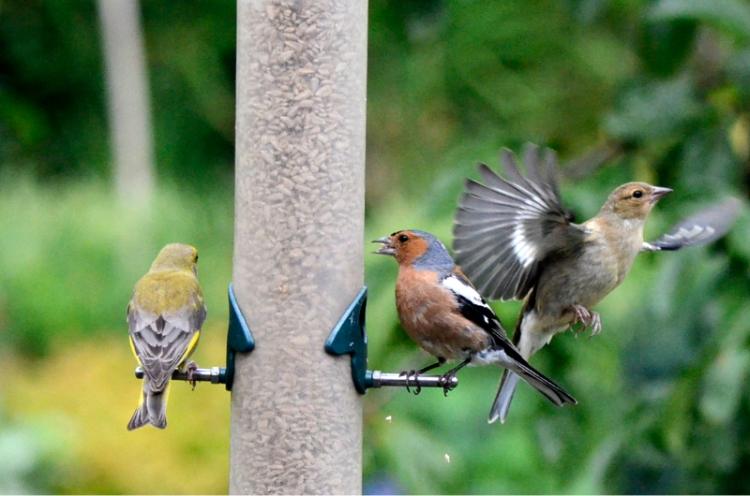 busy feeder 2