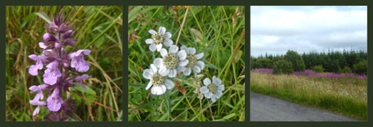 callister flowers