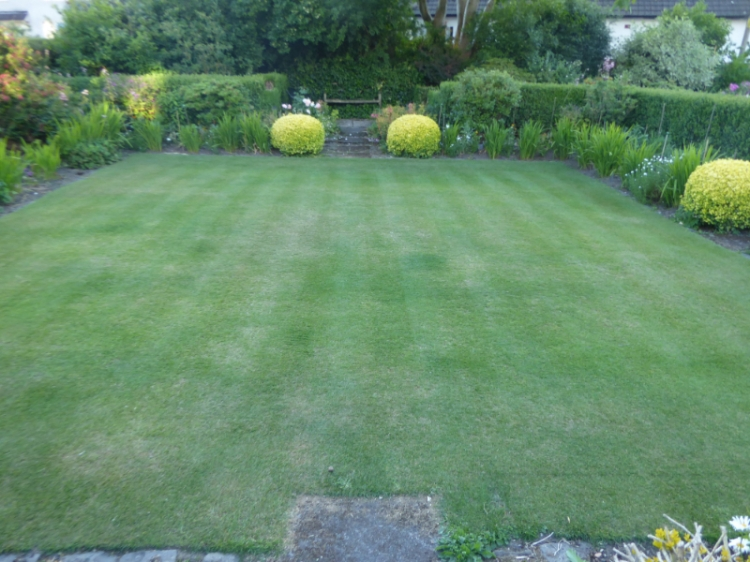 front lawn dry