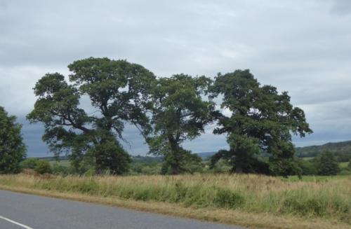 Grainstonehead trees