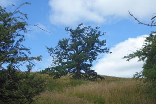 irvine house tree