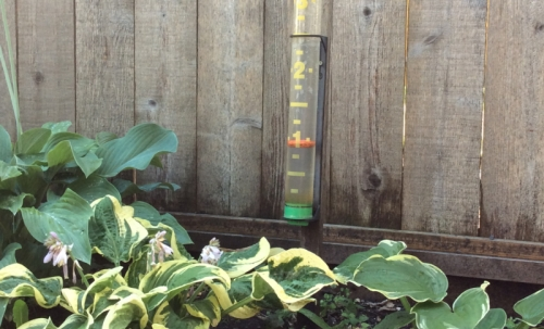 mary jo's rain gauge