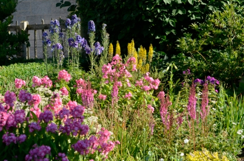 phlox etc in front bed