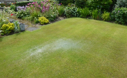 soggy lawn