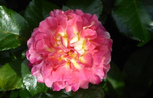 special grandma rose
