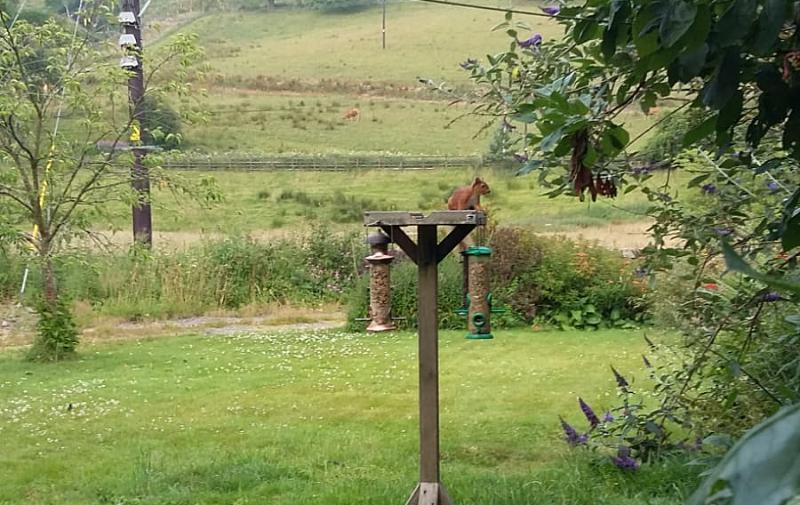 squirrel on birdfeeder