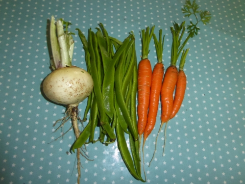 turnip runner beans and carrots