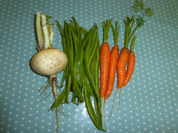 turnip runner beans and carrots