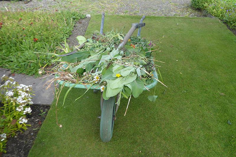 weedy wheelbarrow