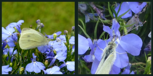 white butterfly on blue