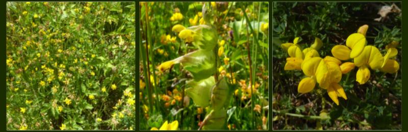 wild flowers 4