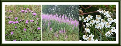 wild flowers kirk wynd