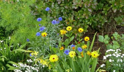 calendula and cornflower