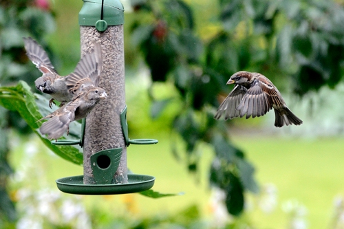 circulating sparrows