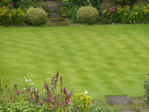 counterstriped lawn