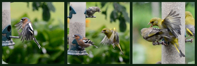 feeder traffic