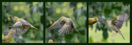 flying goldfinch triptych